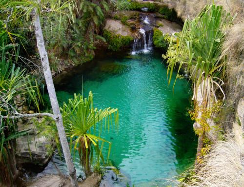 Nove Parchi del Madagascar