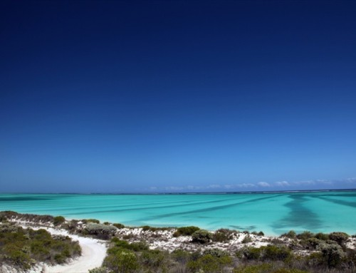 Tsingy, baobab e coralli