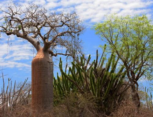 Foresta spinosa
