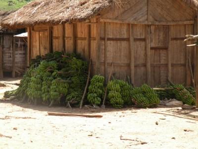 Raccolto in un villaggio Tanala