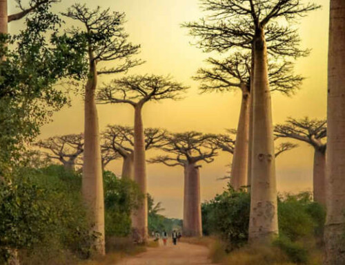 Gran Tour Sud del Madagascar: per chi ama l'avventura